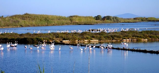 Saline Tarquinia, Federbalneari pronta a denunciare Regione per danno ambientale Fonte: MondoBalneare.com